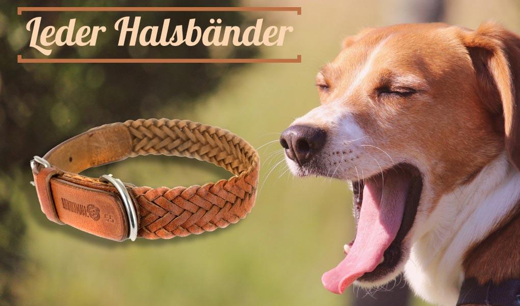 beagle hund leder hundehalsband halsband monkimau