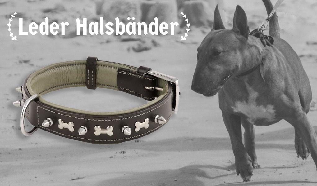 bullterrier bulli hund halsband hundehalsband leder nieten monkimau