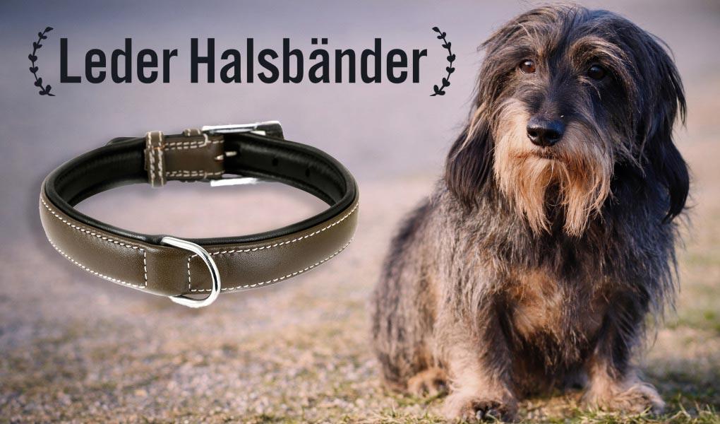 dackel dachshund halsband leder hundehalsband hund monkimau